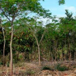 Projeto de Recuperação de Áreas Degradadas-PRAD