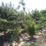 Reflorestamento heterogêneo